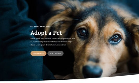 Animal Shelter Website